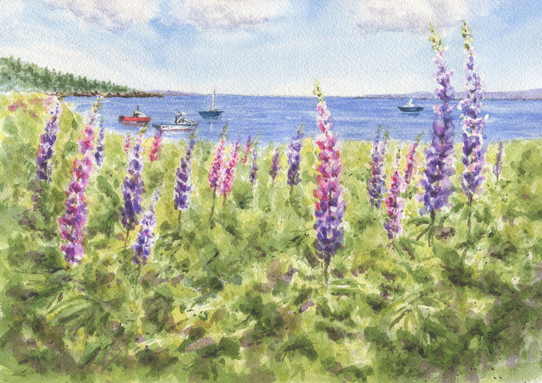 Maine Lupine: watercolor giclee print or original Maine watercolor print lupine art print Maine painting art print framed lupine painting