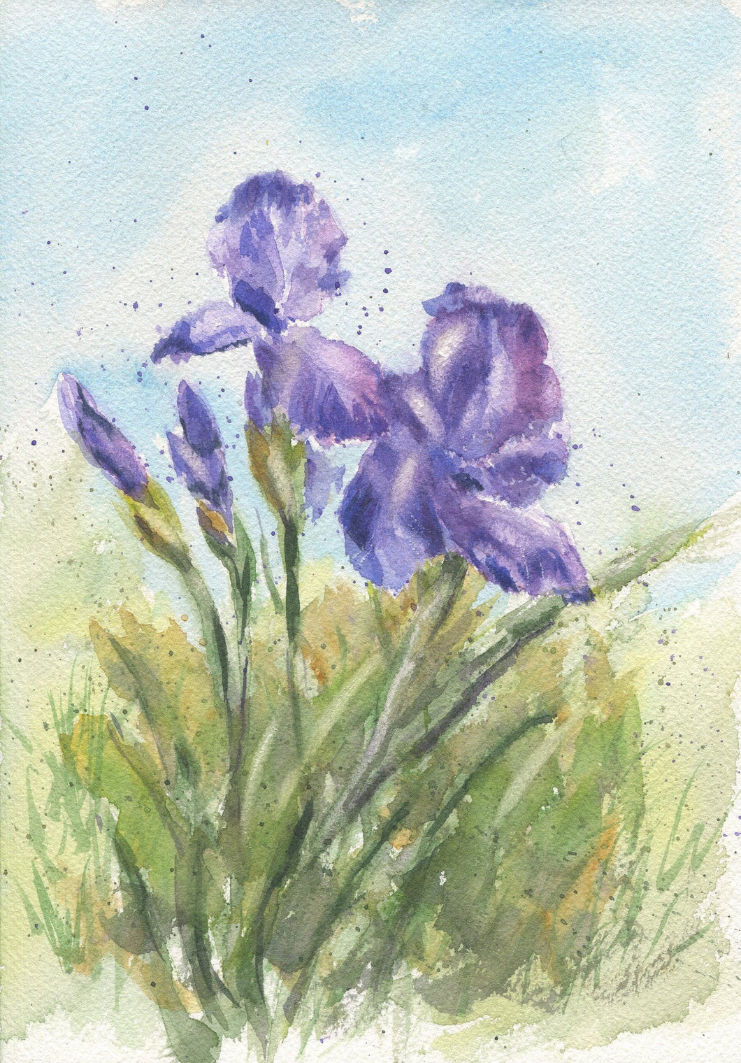 Iris:floral watercolor flower painting watercolor flowers home decor wall decor giclee print iris watercolor, iris watercolor print - Leigh Barry Watercolors