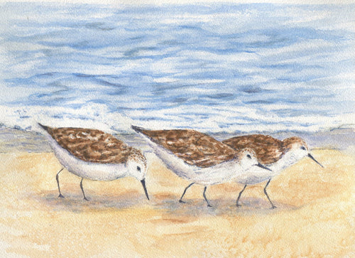 Sandpiper painting original watercolor painting ocean watercolor beach painting print gift ideas original beach paintings bird art - Leigh Barry Watercolors