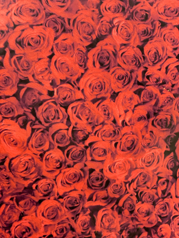Red Rose on Black Printed HTV