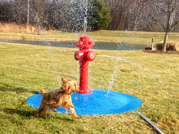 Something special for your pooch - a dog water park!