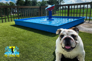 Dog Wading Pool
