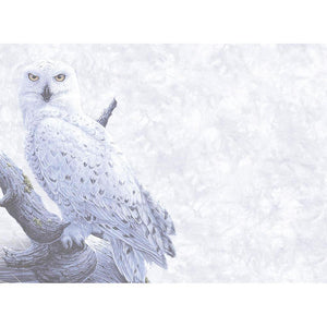 Snowy Owls All Occasion Greeting Card