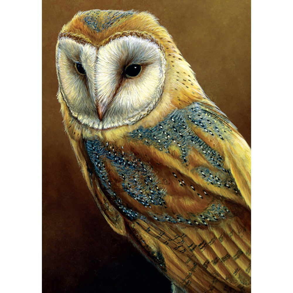 Barn Owl All Occasion Greeting Card 6 pack