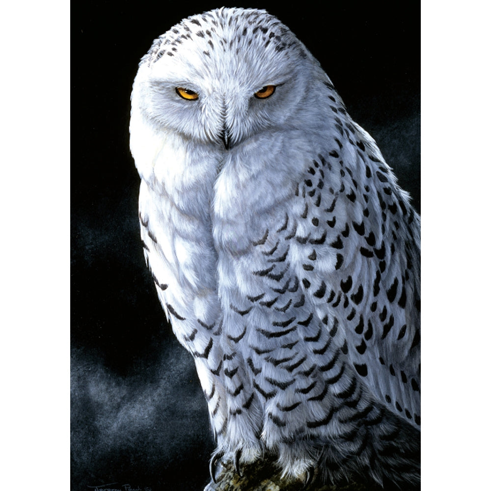 Snowy Owl All Occasion Greeting Card 6 pack