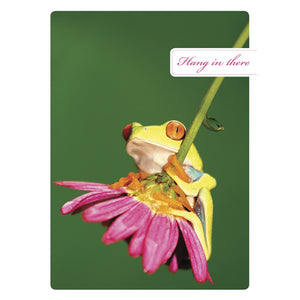 Hang In There Get Well Greeting Card 6 pack
