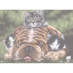 Wrinkles Birthday Greeting Card 6 pack
