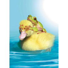Load image into Gallery viewer, Duck Duck Frog Birthday Greeting Card 6 pack