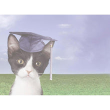 Load image into Gallery viewer, Curiosity Graduation Graduation Greeting Card 4 pack