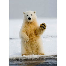 Load image into Gallery viewer, Polar Farewell Farewell Greeting Card 6 pack