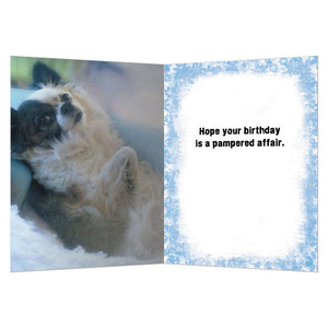 Pampered Affair Greeting Card
