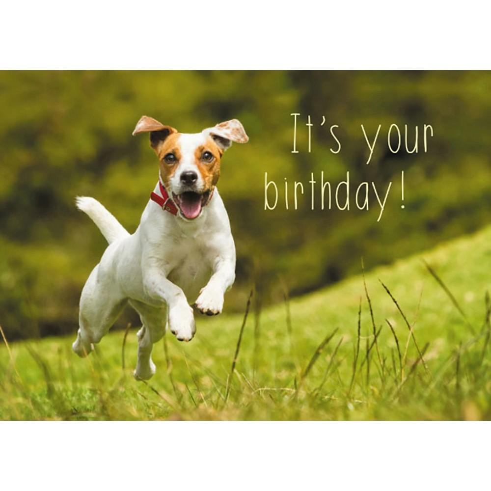 Dog Gate Open Birthday Greeting Card 6 pack