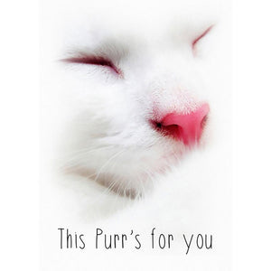 This Purr Greeting Card