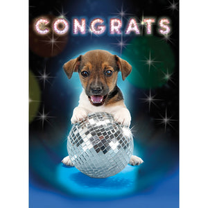 Disco Dog 4 Pack Graduation Greeting Card 4 pack