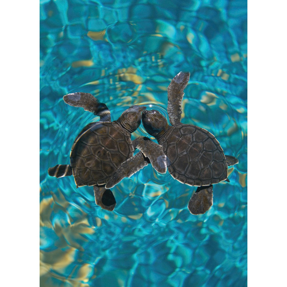 Sea Turtle Pals Friendship Greeting Card 6 pack