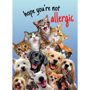 Not Allergic Birthday Greeting Card 6 pack