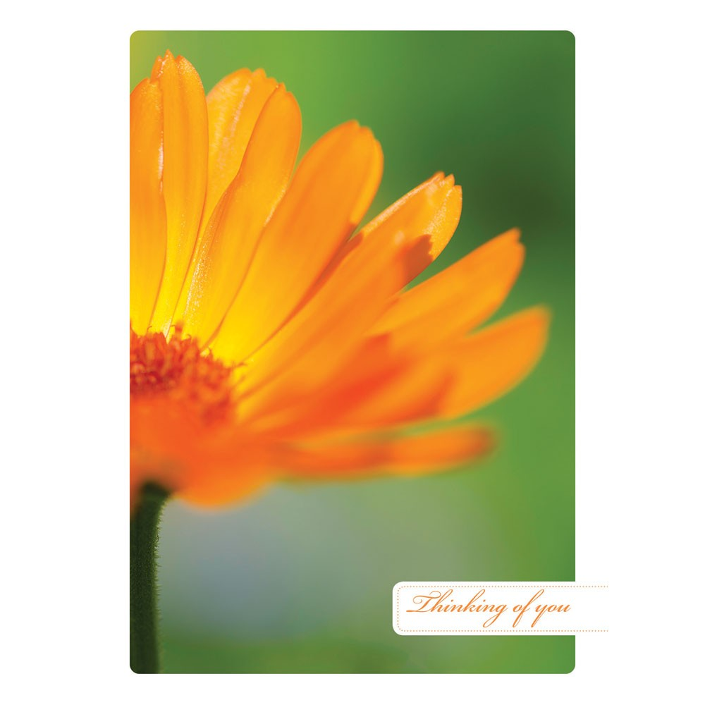 Bright Thoughts Support Greeting Card 6 pack