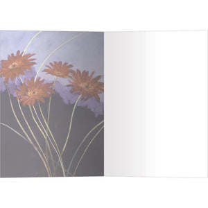 Daisies On Lavender All Occasion Greeting Card 6 pack