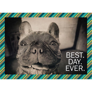 Best Day Ever Dog Birthday Greeting Card 6 pack