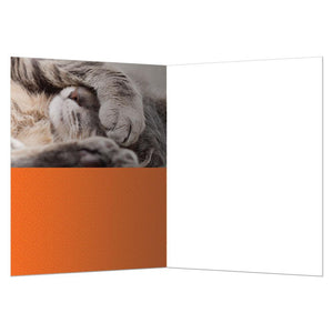 Adult Today All Occasion Greeting Card 6 pack