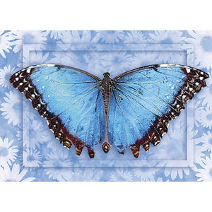 Butterfly #1 All Occasion Greeting Card 6 pack