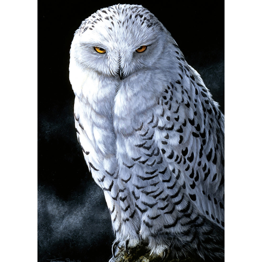 Snowy Owl All Occasion Greeting Card
