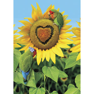 You Are My Sunflower All Occasion Greeting Card