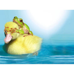 Load image into Gallery viewer, Duck Duck Frog Birthday Greeting Card