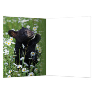 Daisy Bear All Occasion Greeting Card