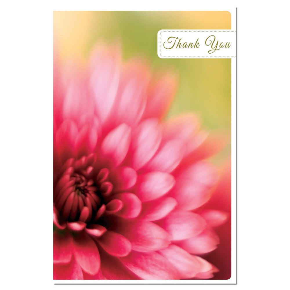 Daisy Thanks Thank You Greeting Card