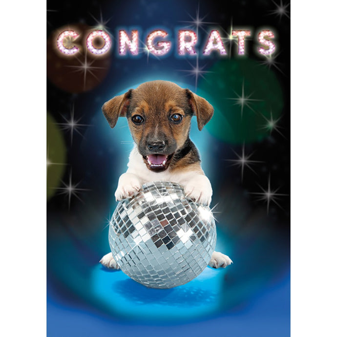 Disco Dog 4 Pack Graduation Greeting Card