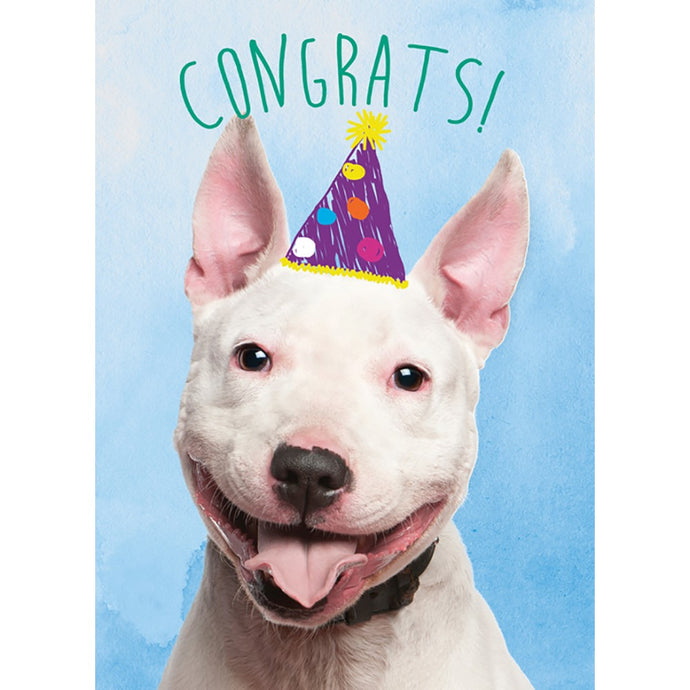 Doggone Congrats 4 Pack Graduation Greeting Card