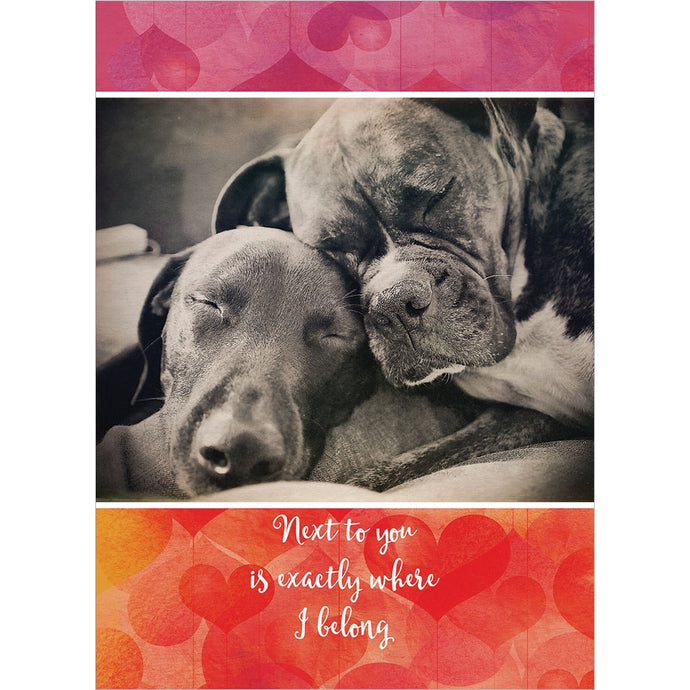 Next to You Valentine's Day Greeting Card