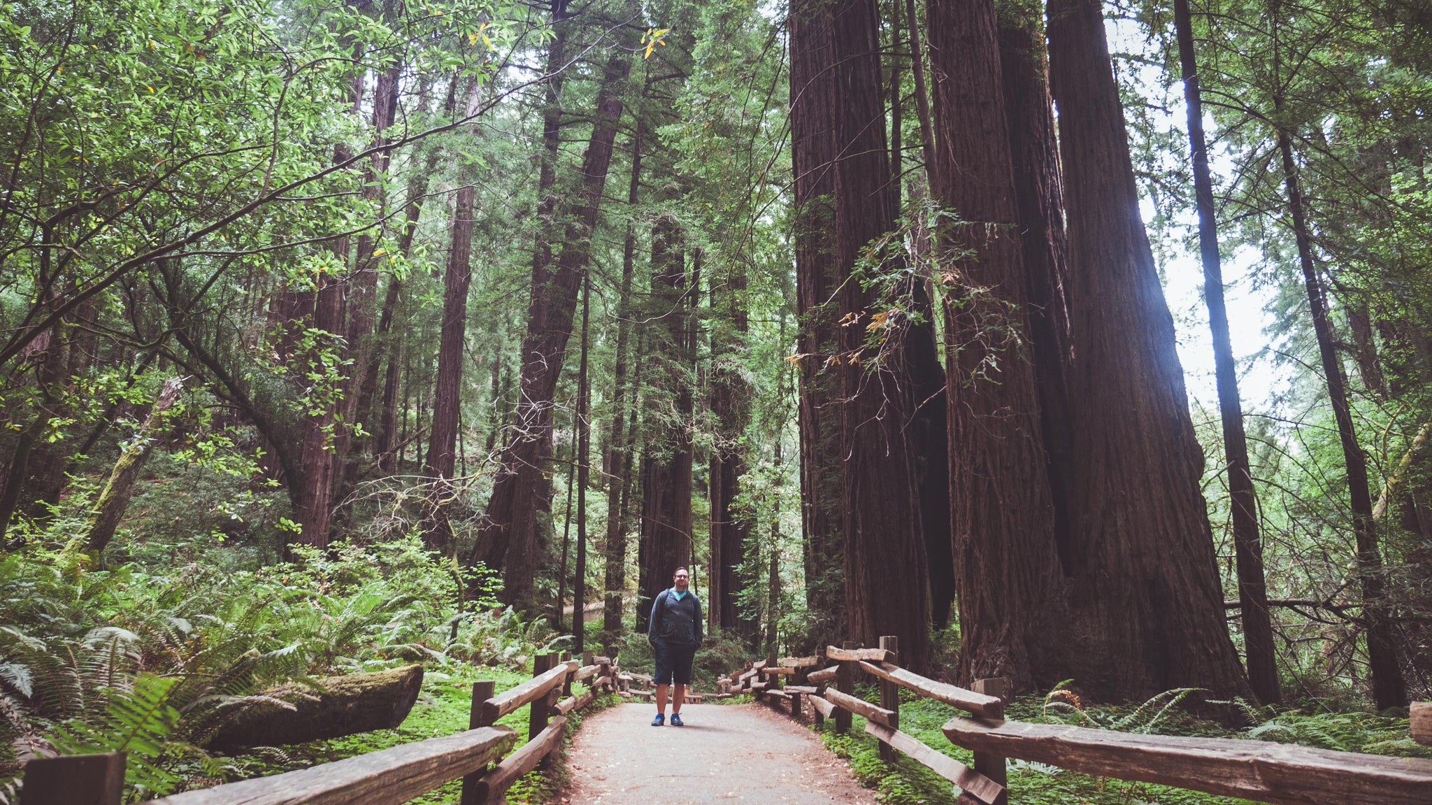 muirwoods-california-sanfrancisc-redwoods-thennowalways