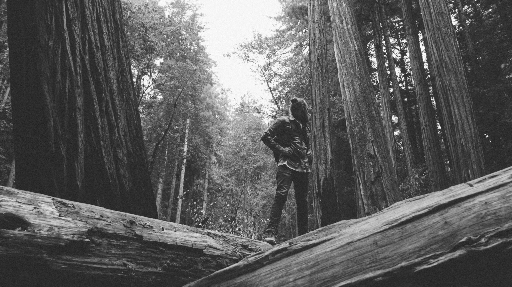 Muirwoods-sanfrancisco-california-hike-thennowalways