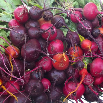 Organic Mixed Color Beets Greens, Bunch