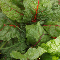 Beet Greens, Joe's Farm