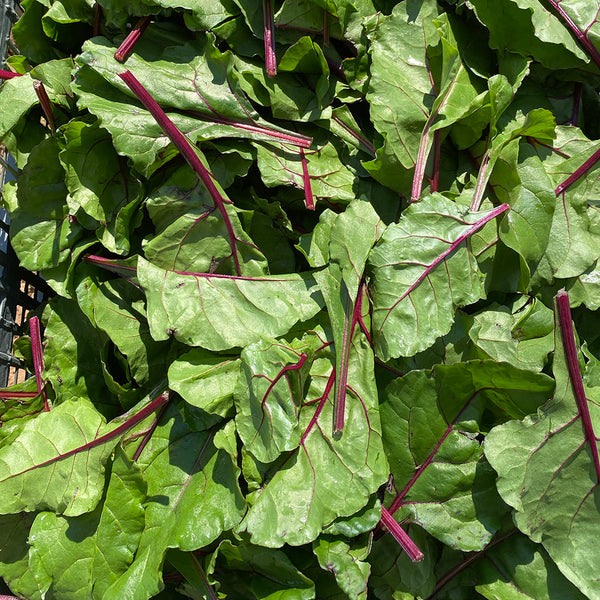 Organic Beet Greens, Joe's Farm