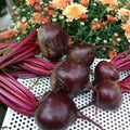 Beets Red Organic (Joe's Farm) 2# Bag