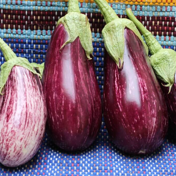 Eggplant Striped Lucilla (Joe's Farm) Each