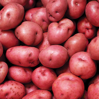 Florida Red Potatoes conventionally grown (Joe's Farm)