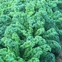 Local Kale  Green - Organic bag, Joe's Farm