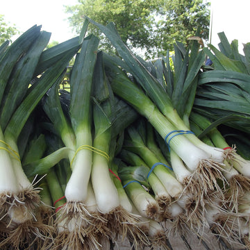 Leeks Organic (Joe's Farm) Bunch