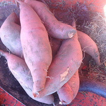 Organic Sweet Potatoes - 2 lb. bag