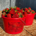 You Pick Organic Strawberries - Heaping Gallon - COMING SOON!