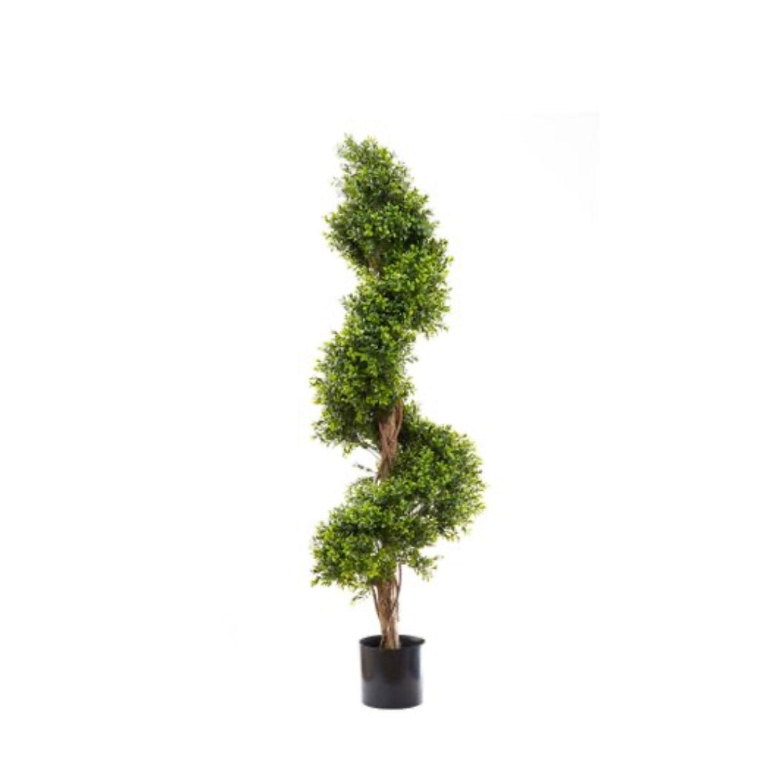 Boxwood Spiral Topiary Tree