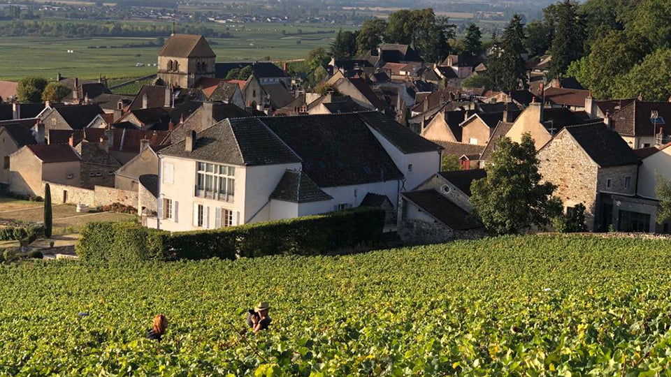 DOMAINE MARQUIS d'ANGERVILLE BURGUNDY