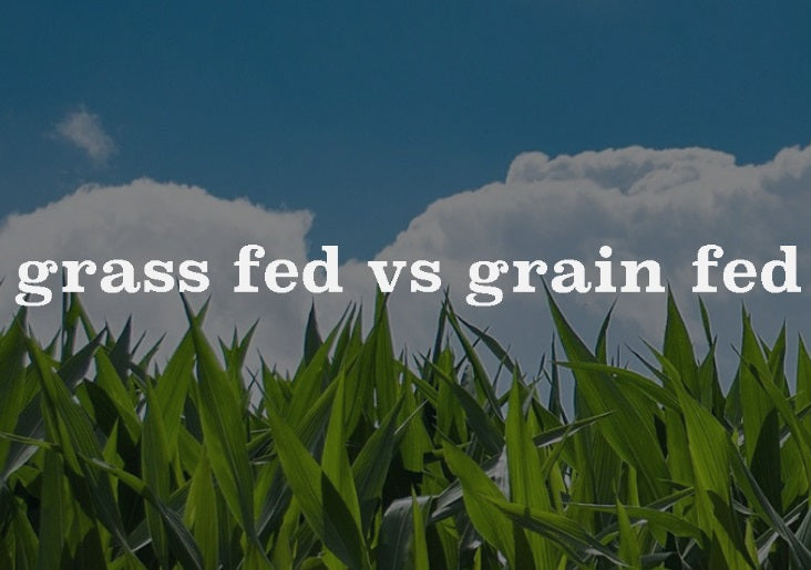 What is the difference between grass fed and grain fed beef?