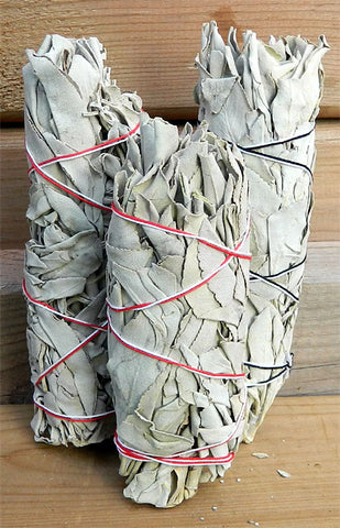 California White Sage - Medium