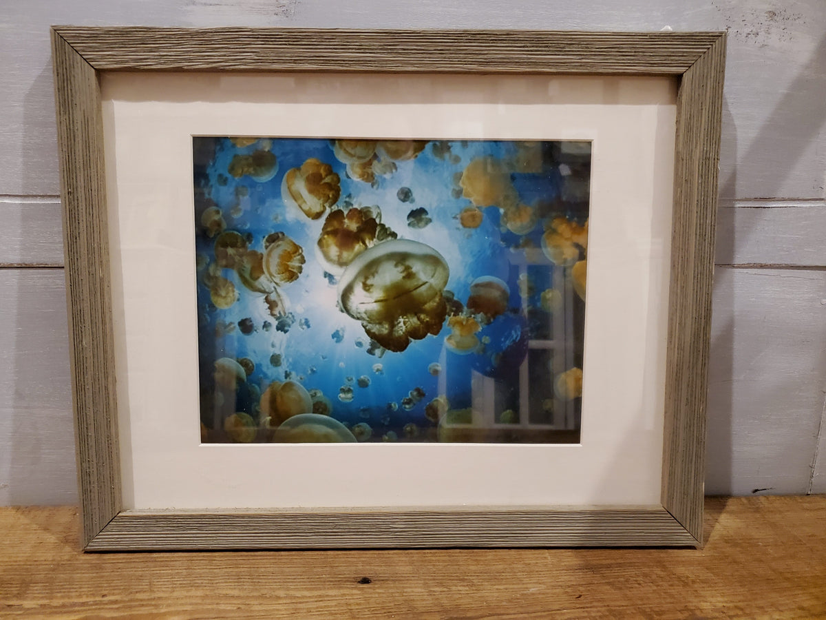 Framed Jellyfish Picture